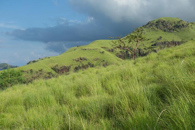 Indonesia paisaje verde