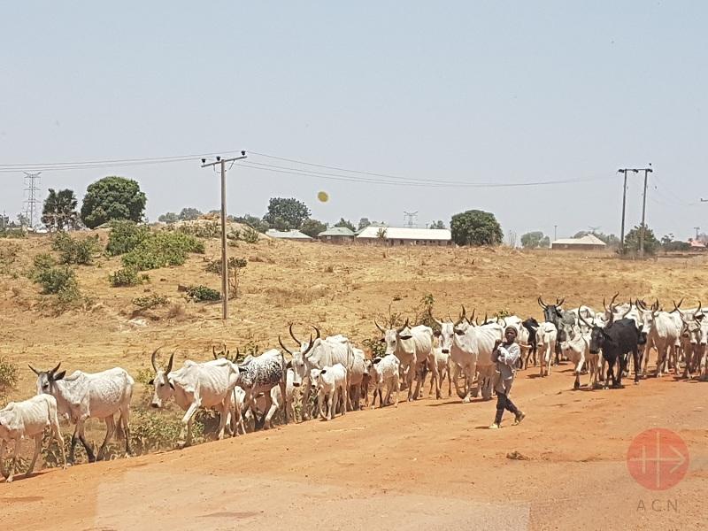 Nigeria fulani con animales web